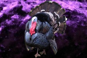 goth turkey