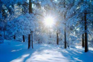 sun through winter trees